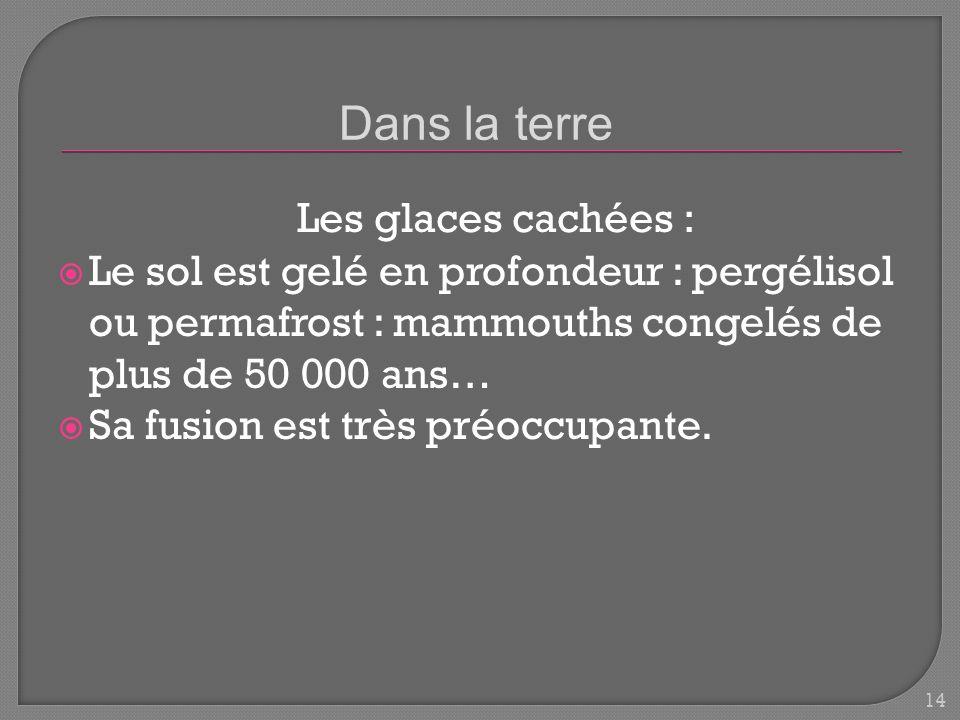 Le sol est gelé en profondeur : pergélisol ou permafrost : mammouths congelés de plus de 50 000 ans… Sa fusion est très préoccupante.