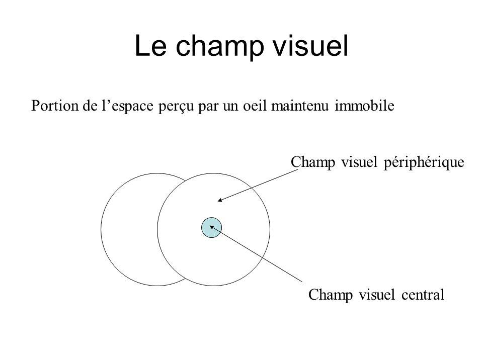 Le champ visuel Portion de lespace perçu par un oeil maintenu immobile Champ visuel périphérique Champ visuel central