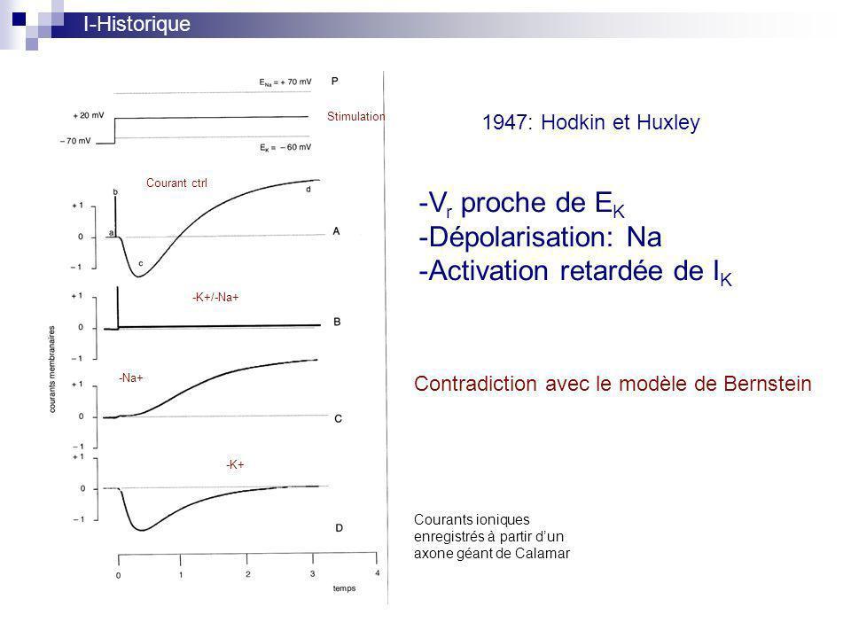 1947: Hodkin et Huxley Stimulation Courant ctrl -K+/-Na+ -Na+ -K+ Contradiction avec le modèle de Bernstein I-Historique Courants ioniques enregistrés à partir dun axone géant de Calamar -V r proche de E K -Dépolarisation: Na -Activation retardée de I K