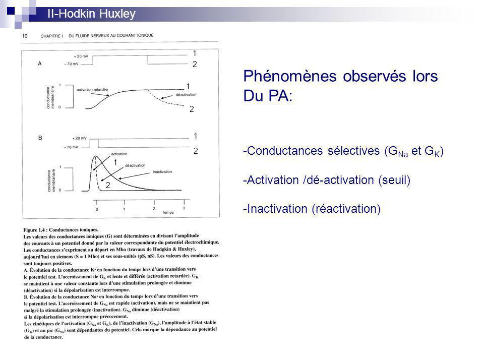 Phénomènes observés lors Du PA: -Conductances sélectives (G Na et G K ) -Activation /dé-activation (seuil) -Inactivation (réactivation) 1 2 1 2 1 2 1 2 II-Hodkin Huxley