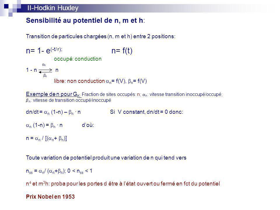 II-Hodkin Huxley Sensibilité au potentiel de n, m et h: Transition de particules chargées (n, m et h) entre 2 positions: n= 1- e (-t/ ); n= f(t) occupé: conduction n 1 - n n n libre: non conduction n = f(V), n = f(V) Exemple de n pour G K: Fraction de sites occupés: n; n : vitesse transition inoccupé/occupé; n : vitesse de transition occupé/inoccupé dn/dt = n (1-n) – n.