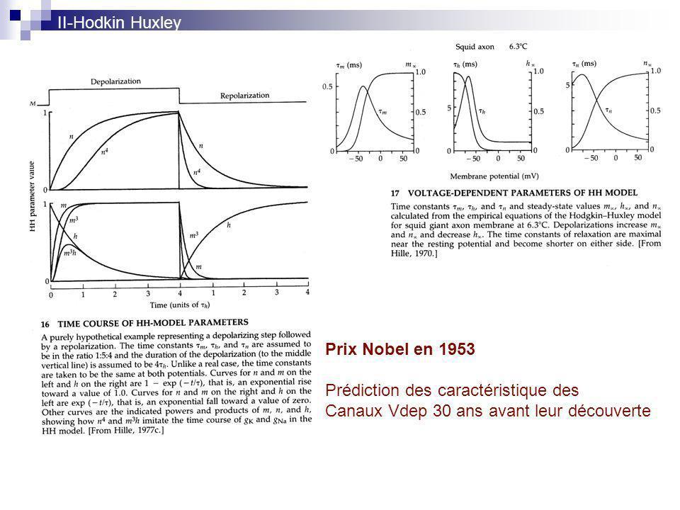 Prédiction des caractéristique des Canaux Vdep 30 ans avant leur découverte II-Hodkin Huxley