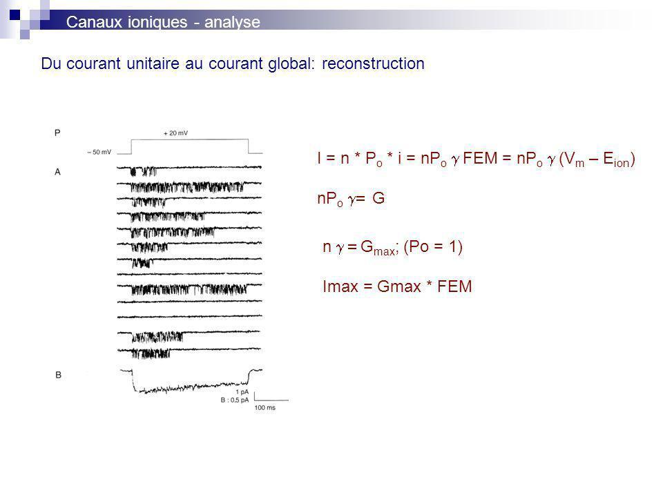 Du courant unitaire au courant global: reconstruction I = n * P o * i = nP o FEM = nP o (V m – E ion ) nP o G n G max ; (Po = 1) Imax = Gmax * FEM