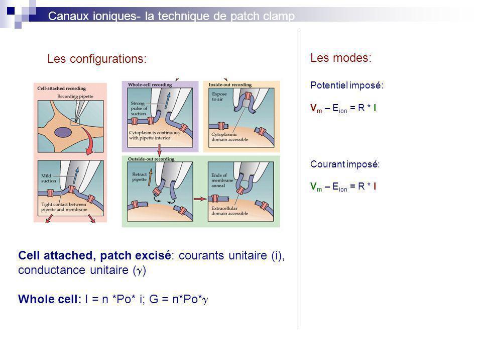 Canaux ioniques- la technique de patch clamp Les configurations: Les modes: Potentiel imposé: V m – E ion = R * I Courant imposé: V m – E ion = R * I Cell attached, patch excisé: courants unitaire (i), conductance unitaire ( ) Whole cell: I = n *Po* i; G = n*Po*