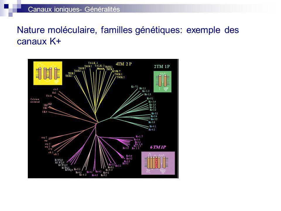 Nature moléculaire, familles génétiques: exemple des canaux K+ Canaux ioniques- Généralités