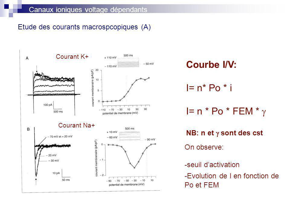 Etude des courants macrospcopiques (A) Canaux ioniques voltage dépendants Courbe I/V: I= n* Po * i I= n * Po * FEM * NB: n et sont des cst Courant K+ Courant Na+ On observe: -seuil dactivation -Evolution de I en fonction de Po et FEM