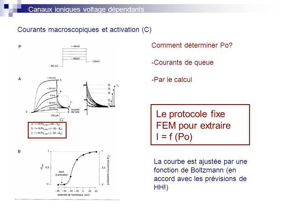 Courants macroscopiques et activation (C) Canaux ioniques voltage dépendants Comment déterminer Po? -Courants de queue -Par le calcul La courbe est aj