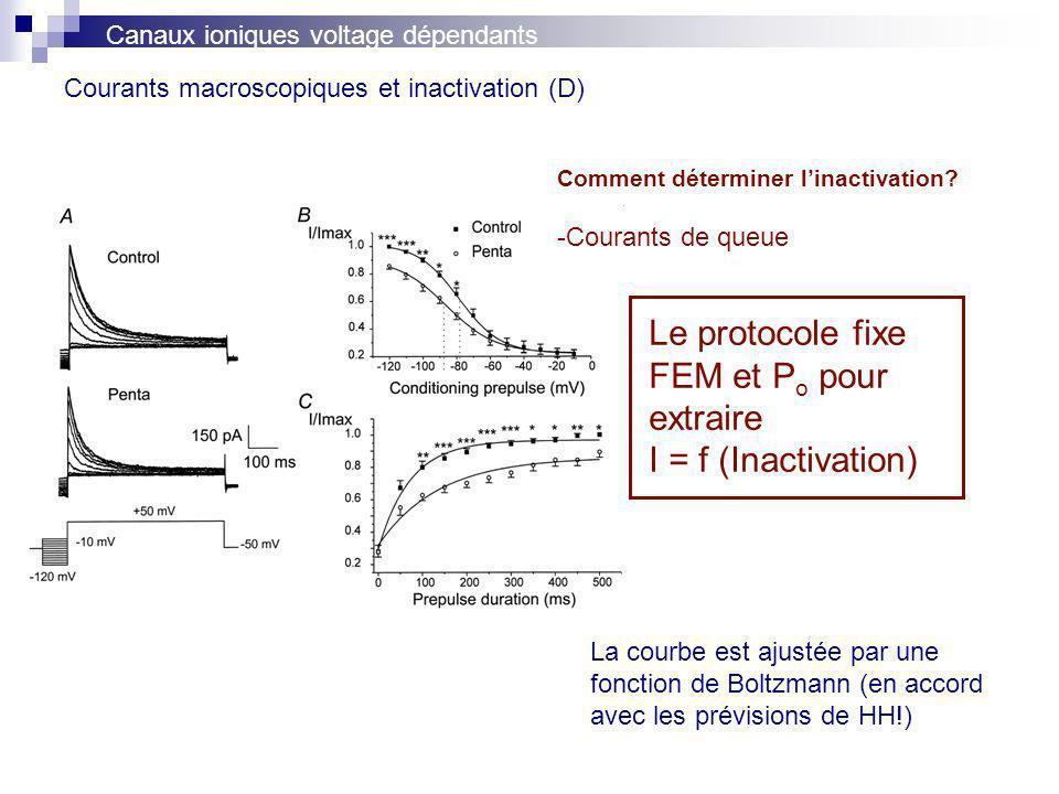 Courants macroscopiques et inactivation (D) Canaux ioniques voltage dépendants Comment déterminer linactivation? -Courants de queue Le protocole fixe