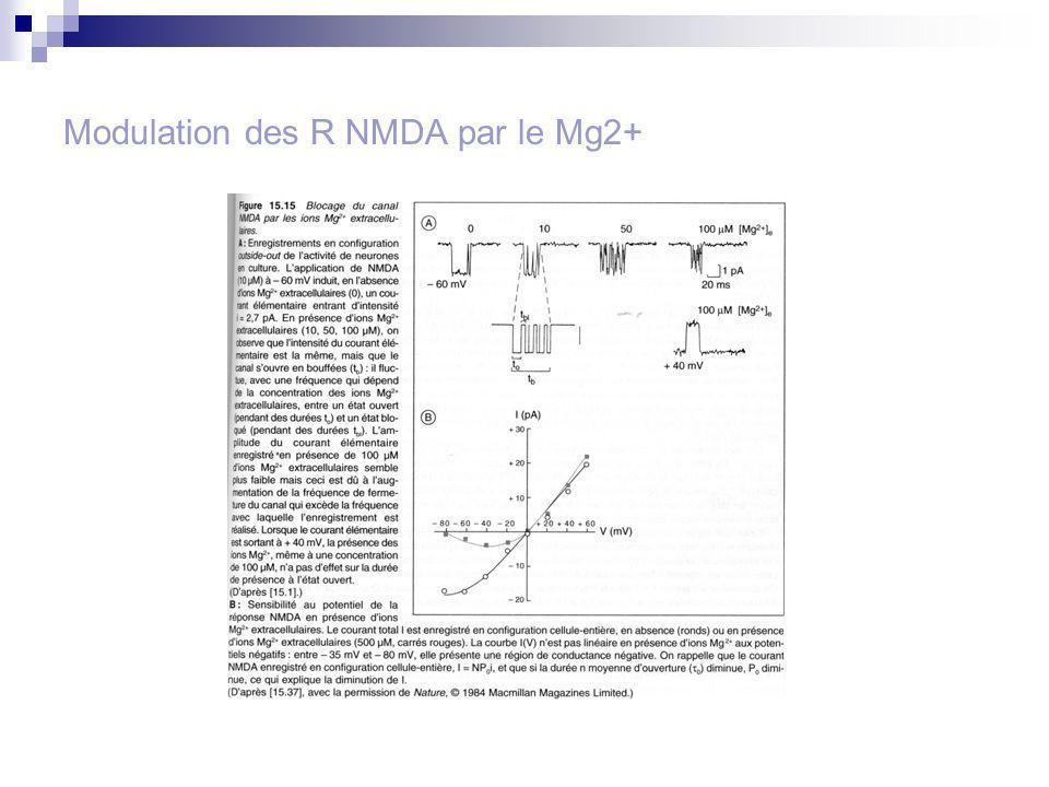 Modulation des R NMDA par le Mg2+