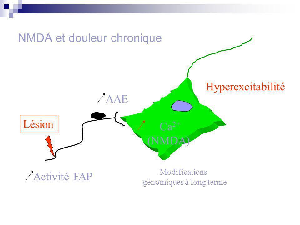 NMDA et douleur chronique Activité FAP AAE Modifications génomiques à long terme Hyperexcitabilité Lésion Ca 2+ (NMDA)