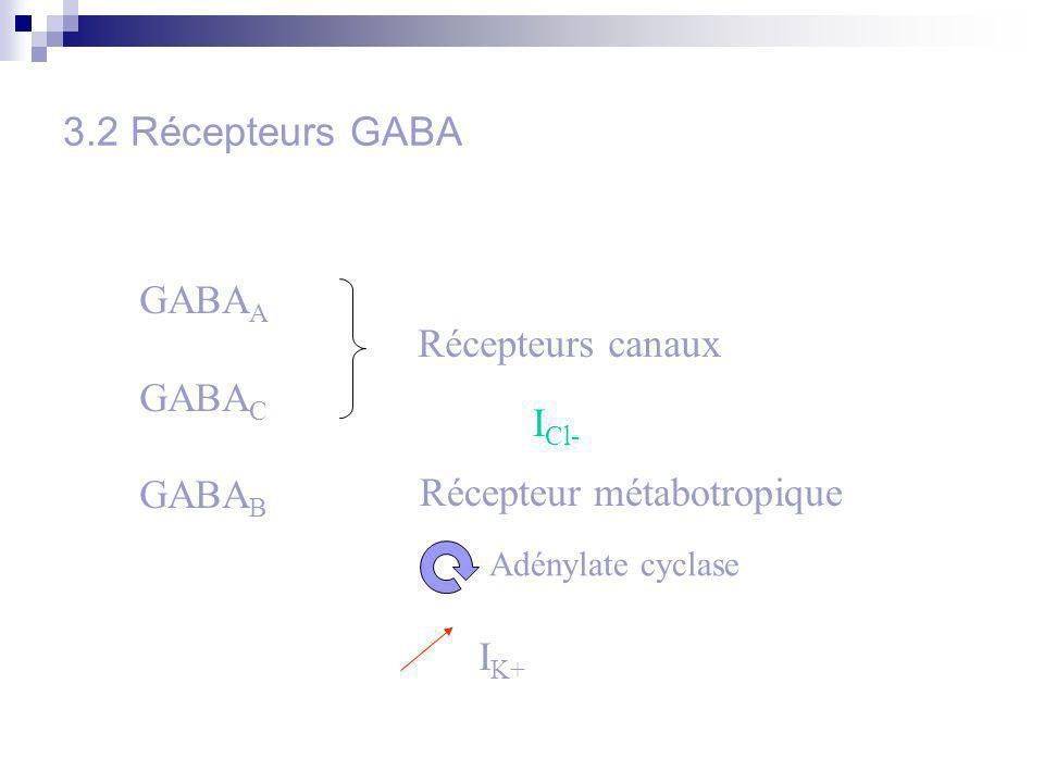 3.2 Récepteurs GABA GABA A GABA C GABA B Récepteurs canaux I Cl- Récepteur métabotropique Adénylate cyclase I K+