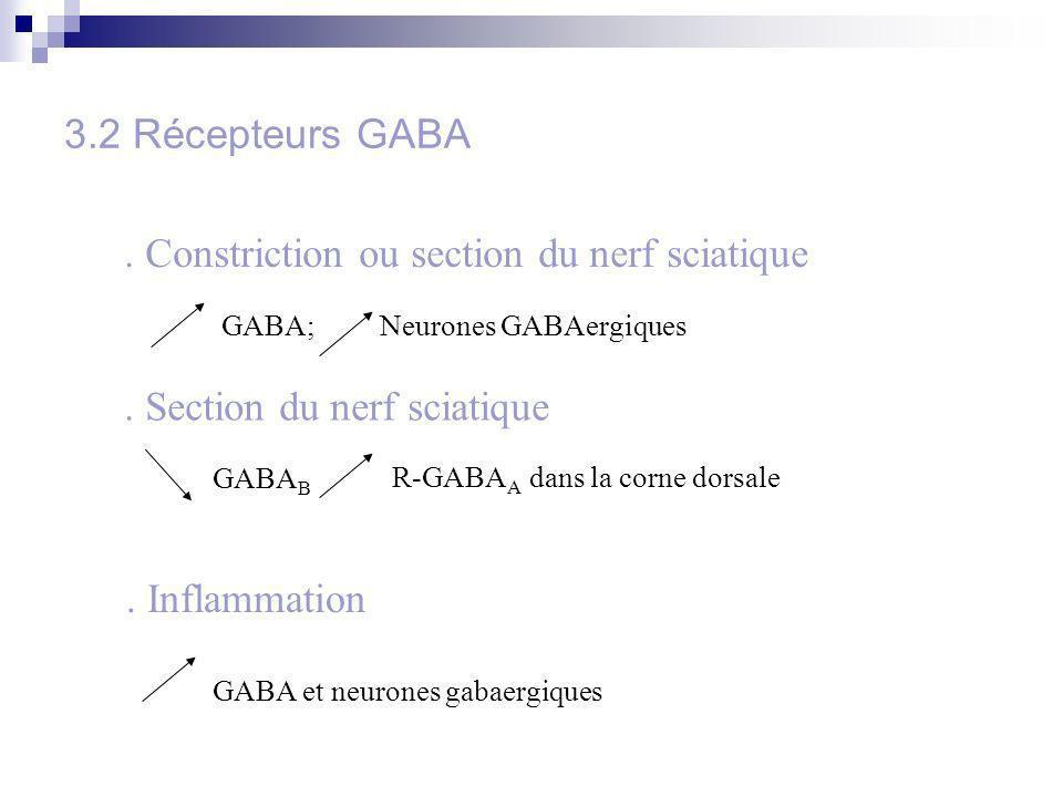 3.2 Récepteurs GABA GABA; Neurones GABAergiques. Constriction ou section du nerf sciatique. Section du nerf sciatique GABA B R-GABA A dans la corne do