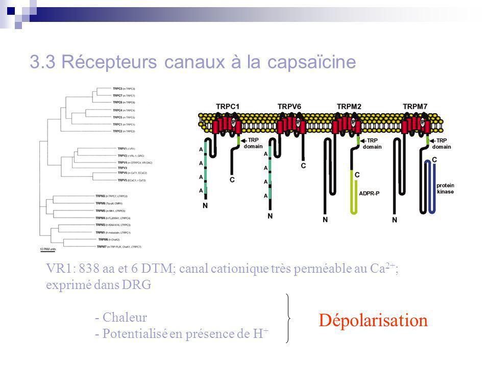 3.3 Récepteurs canaux à la capsaïcine VR1: 838 aa et 6 DTM; canal cationique très perméable au Ca 2+ ; exprimé dans DRG - Chaleur - Potentialisé en présence de H + Dépolarisation
