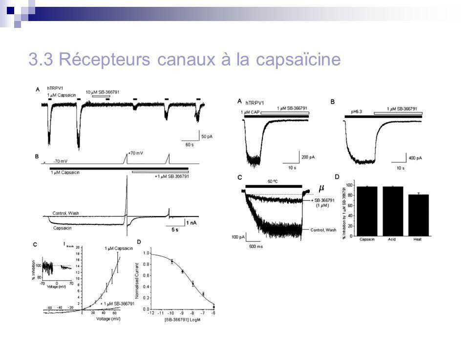 3.3 Récepteurs canaux à la capsaïcine