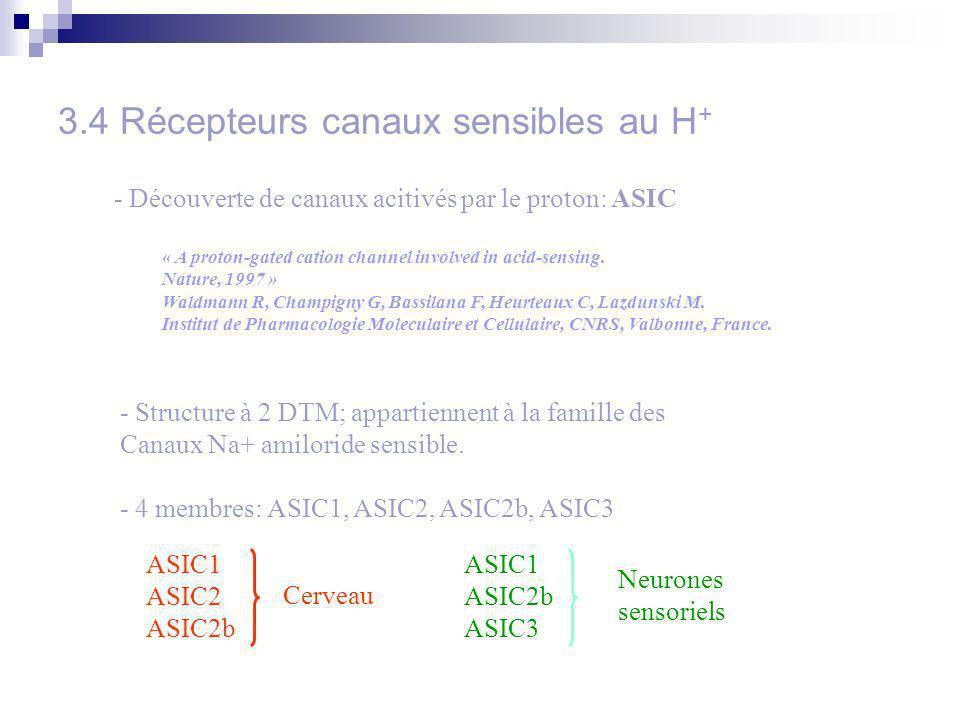 3.4 Récepteurs canaux sensibles au H + - Découverte de canaux acitivés par le proton: ASIC « A proton-gated cation channel involved in acid-sensing. N