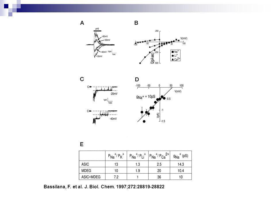 Bassilana, F. et al. J. Biol. Chem. 1997;272:28819-28822