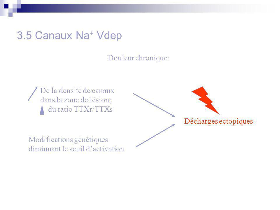 3.5 Canaux Na + Vdep Douleur chronique: Modifications génétiques diminuant le seuil dactivation Décharges ectopiques De la densité de canaux dans la zone de lésion; du ratio TTXr/TTXs