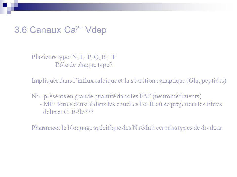 3.6 Canaux Ca 2+ Vdep Plusieurs type: N, L, P, Q, R; T Rôle de chaque type? Impliqués dans linflux calcique et la sécrétion synaptique (Glu, peptides)