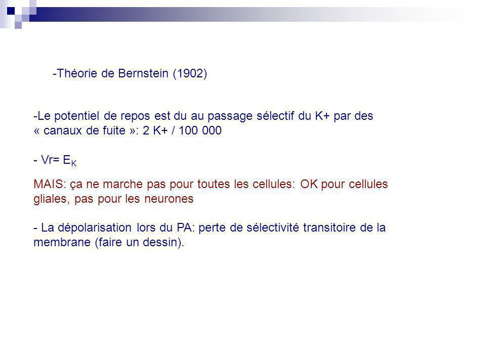 -Théorie de Bernstein (1902) -Le potentiel de repos est du au passage sélectif du K+ par des « canaux de fuite »: 2 K+ / 100 000 - Vr= E K MAIS: ça ne
