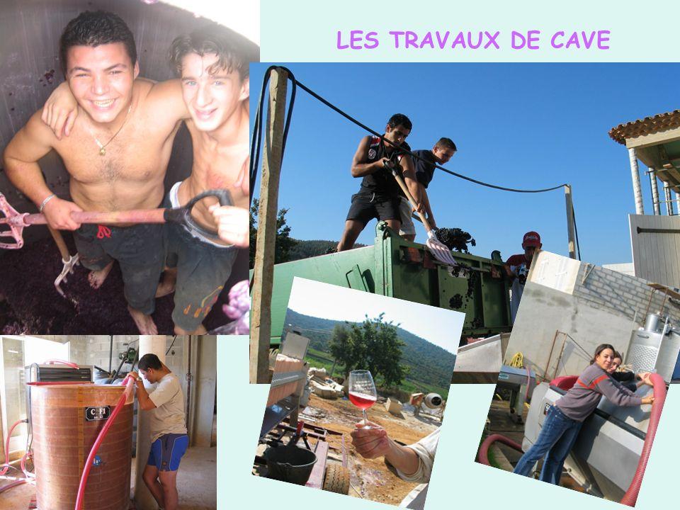 LES TRAVAUX DE CAVE