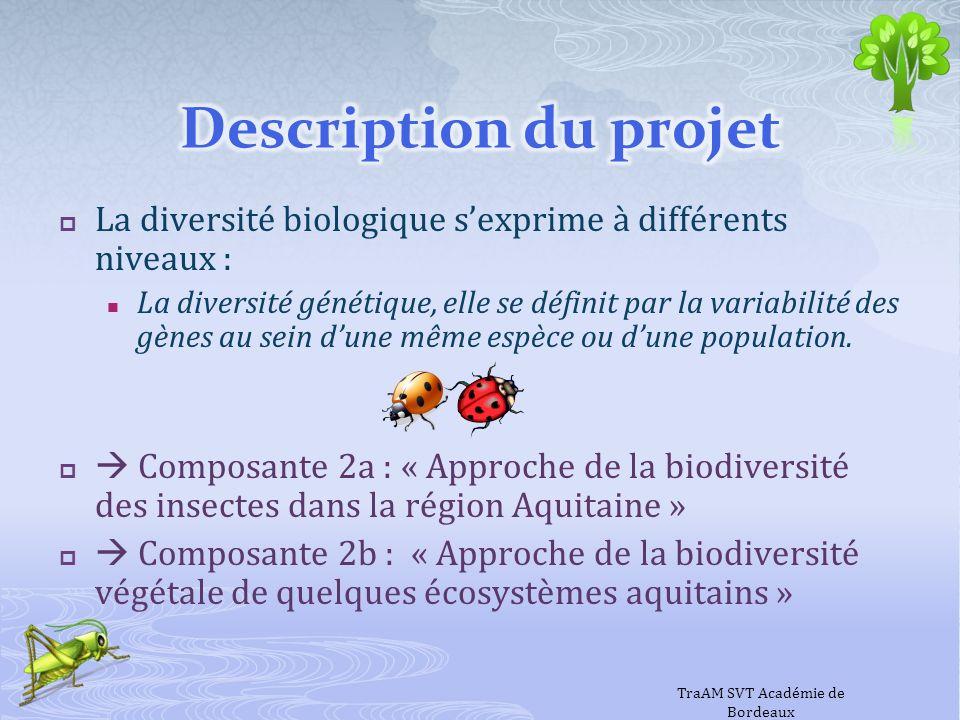 Un projet, deux équipes Les composantes 1 : « Satellites à très haute résolution et exploration des écosystèmes » et 2b : « Approche de la biodiversité végétale de quelques écosystèmes aquitains » sont assurées par le groupe de travail Espace de lacadémie de Bordeaux animé par Yves Darbarie La composante 2a : « Approche de la biodiversité des insectes dans la région Aquitaine » est assurée par le groupe de travail Entomofaune dAquitaine de lacadémie de Bordeaux animé par Pierre Ducamp La coordination et lavancement des réalisations des deux équipes sont réalisés par Marie-Hélène Perez IA- IPR SVT TraAM SVT Académie de Bordeaux