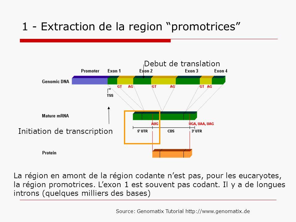1 - Extraction de la region promotrices La région en amont de la région codante nest pas, pour les eucaryotes, la région promotrices. Lexon 1 est souv