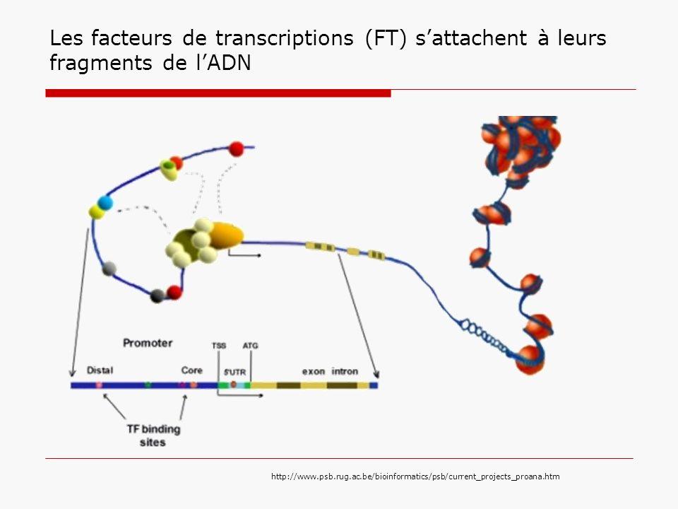 Les FT forment des modules La distance et lordre peuvent etre important Il y a des FT, qui ne peuvent pas se lier seul.