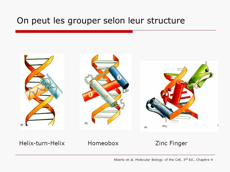 On peut les grouper selon leur structure Helix-turn-HelixHomeobox Alberts et al, Molecular Biology of the Cell, 3 rd Ed., Chapitre 9 Zinc Finger