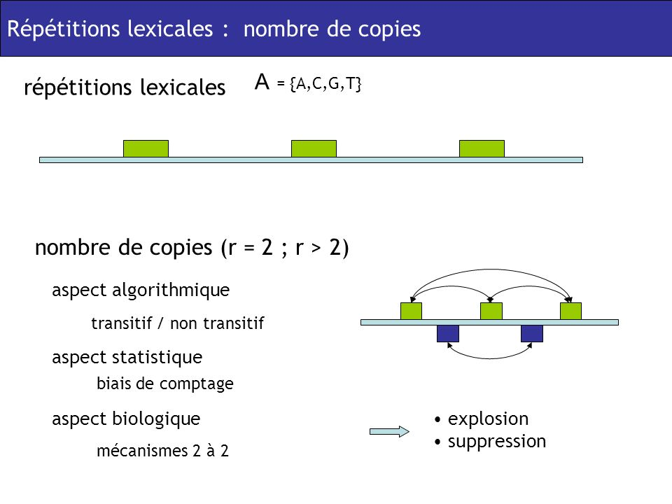 Répétitions lexicales : nombre de copies A = {A,C,G,T} répétitions lexicales nombre de copies (r = 2 ; r > 2) aspect statistique biais de comptage aspect algorithmique transitif / non transitif aspect biologique mécanismes 2 à 2 explosion suppression