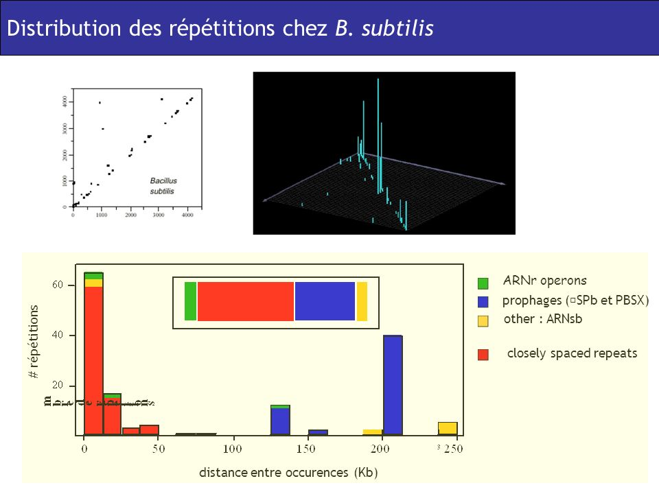 Distribution des répétitions chez B. subtilis ARNr operons prophages (SPb et PBSX) other : ARNsb closely spaced repeats distance entre occurences (Kb)