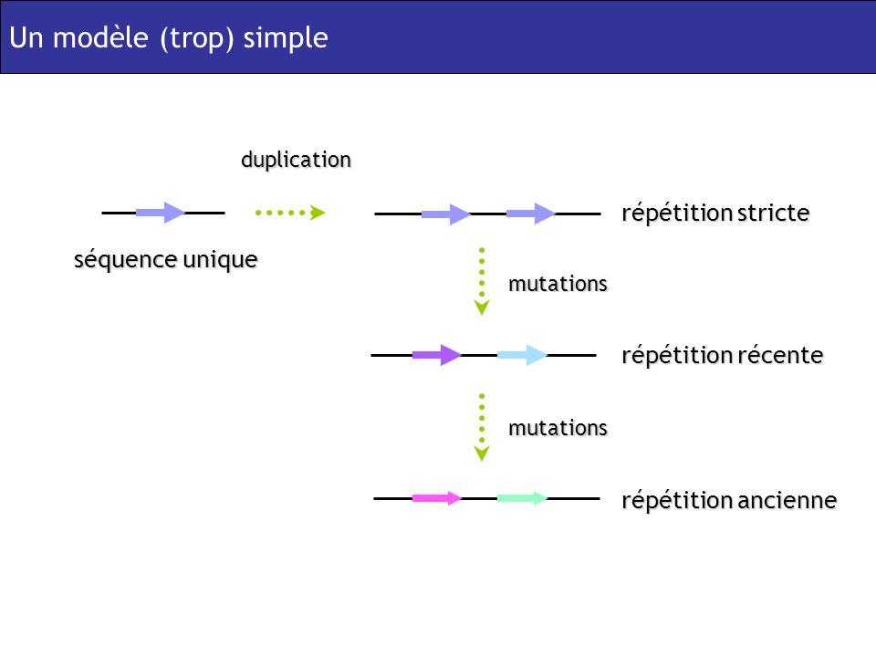 séquence unique répétition stricte duplication répétition récente mutations répétition ancienne mutations Un modèle (trop) simple