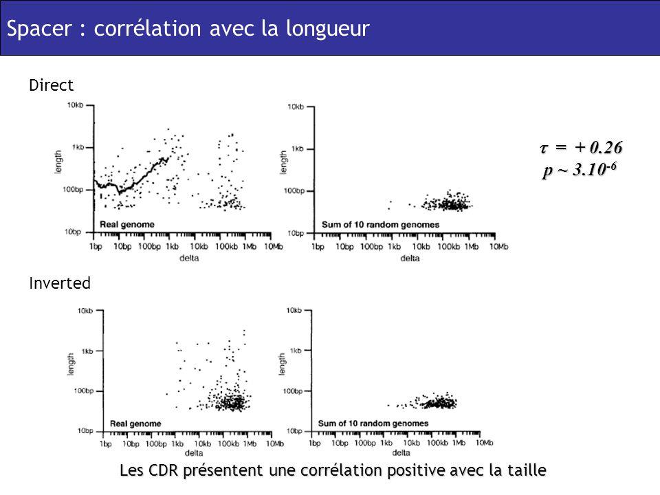 Spacer : corrélation avec la longueur Inverted Direct = + 0.26 p ~ 3.10 -6 = + 0.26 p ~ 3.10 -6 Les CDR présentent une corrélation positive avec la taille