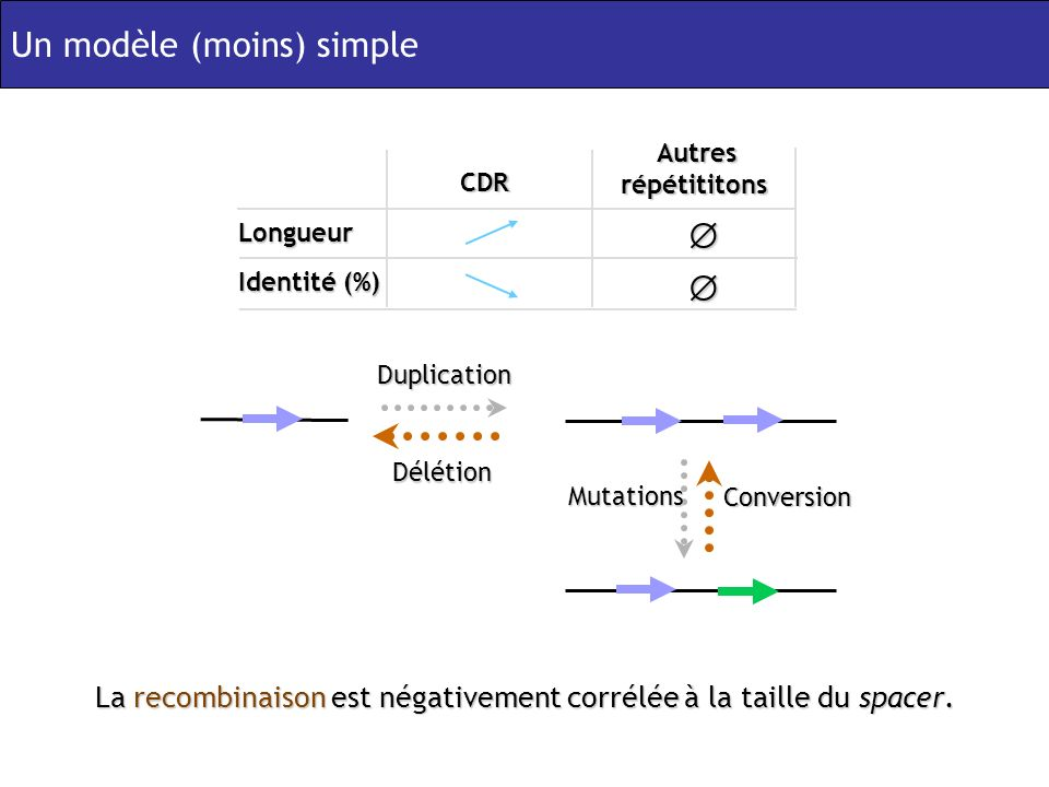 La recombinaison est négativement corrélée à la taille du spacer.