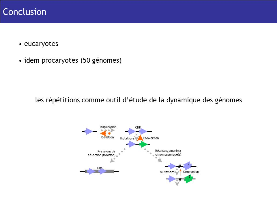 Conclusion eucaryotes idem procaryotes (50 génomes) les répétitions comme outil détude de la dynamique des génomesCDRDélétion Duplication Conversion Mutations Pressions de sélection (fonction) CDS Conversion Mutations .