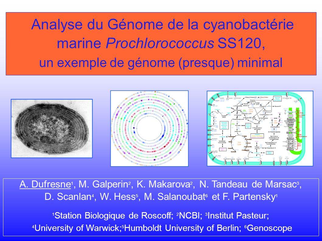 Analyse du Génome de la cyanobactérie marine Prochlorococcus SS120, un exemple de génome (presque) minimal A.