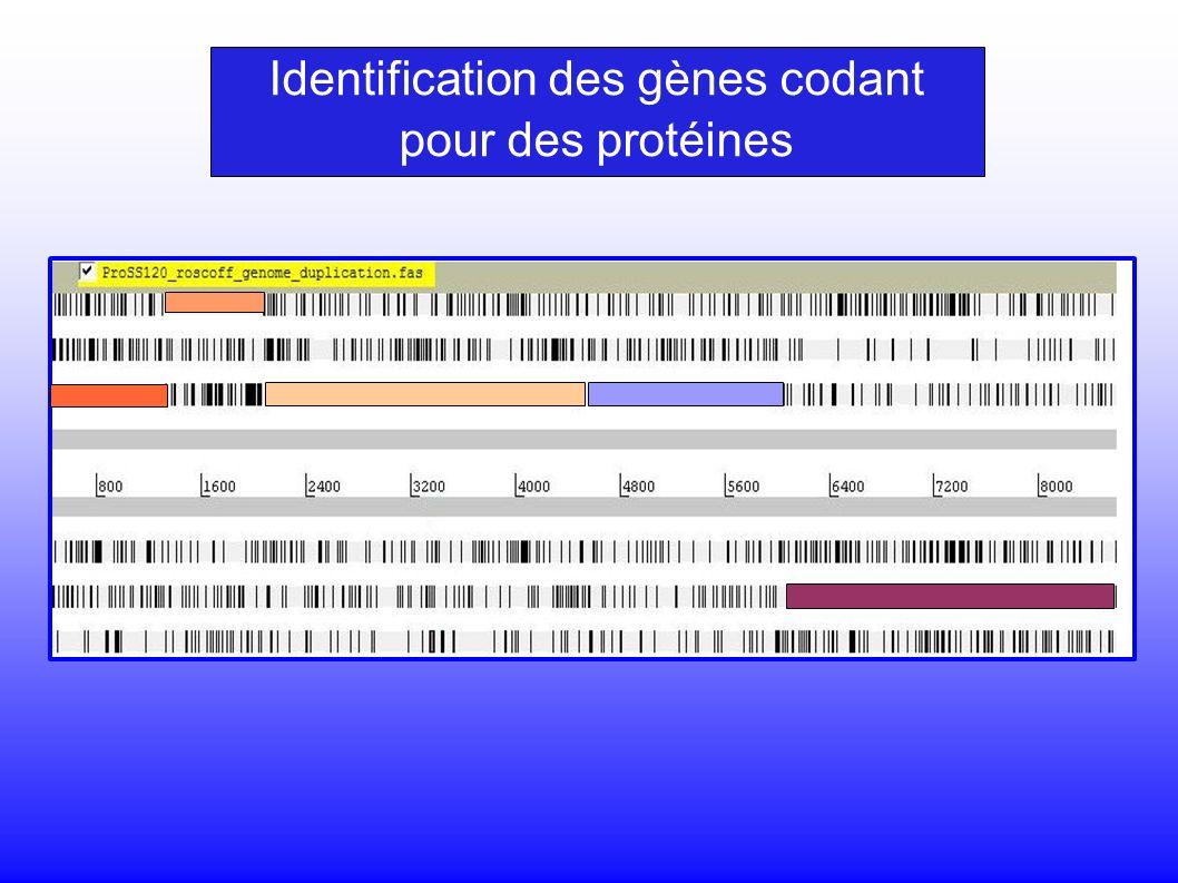 Identification des gènes codant pour des protéines