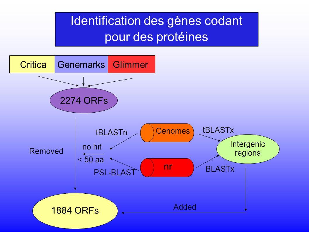 Critica Genemarks Glimmer 2274 ORFs 1884 ORFs Intergenic regions tBLASTx BLASTx Added nr Genomes PSI -BLAST tBLASTn Removed no hit < 50 aa Identification des gènes codant pour des protéines