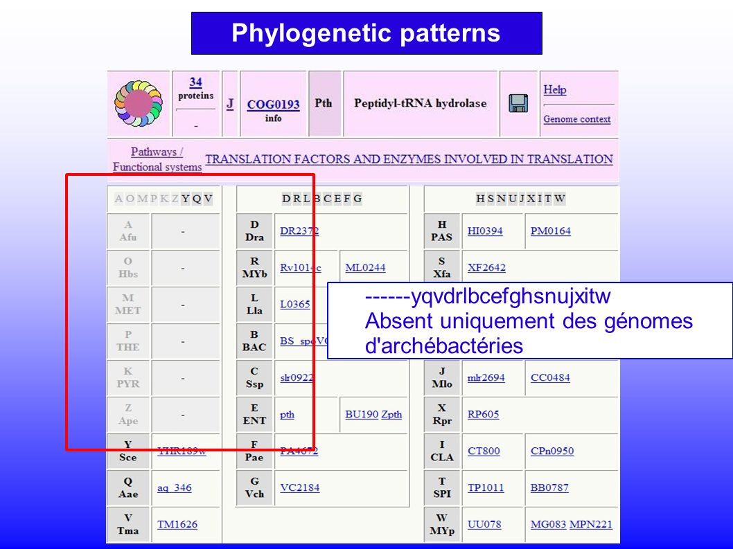 ------yqvdrlbcefghsnujxitw Absent uniquement des génomes d archébactéries Phylogenetic patterns