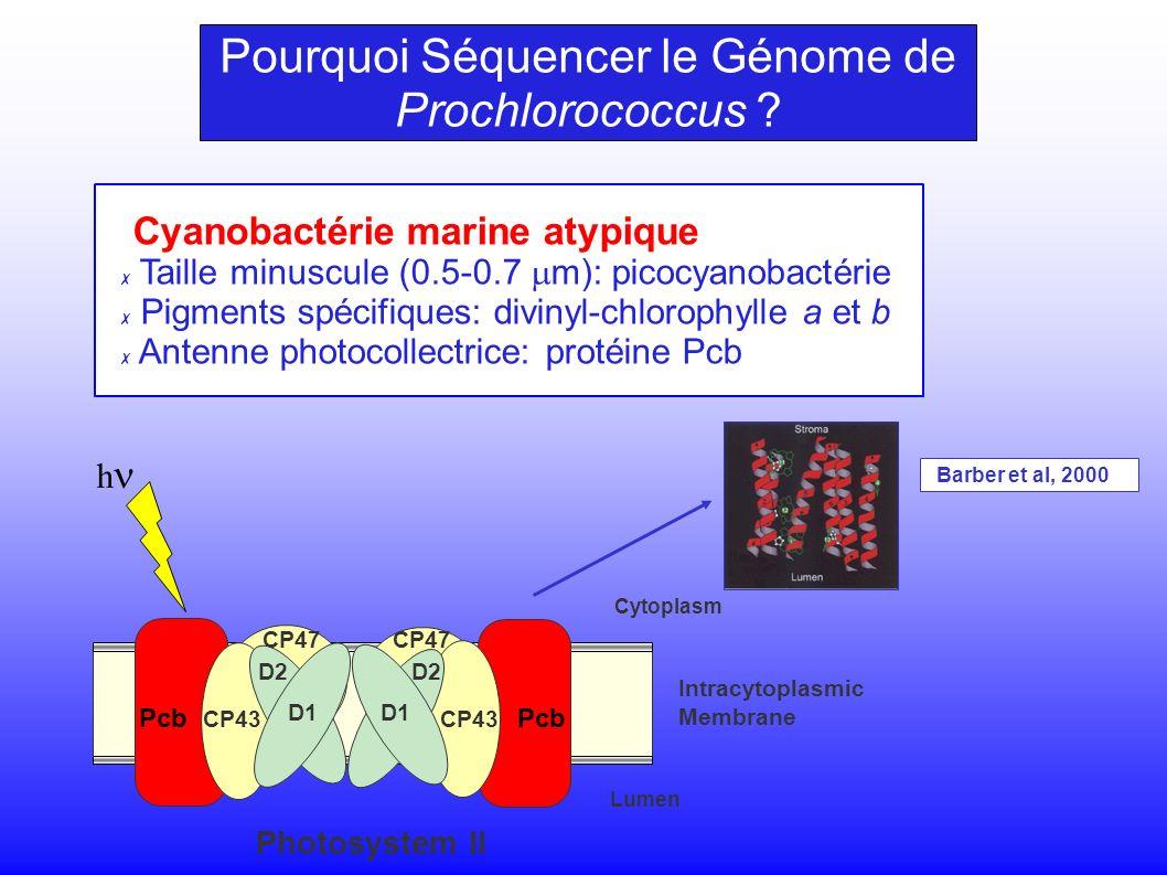 CP47 CP43 D2 D1 Intracytoplasmic Membrane Cytoplasm Lumen CP43 CP47 D2 D1 Photosystem II h Pcb Barber et al, 2000 Pourquoi Séquencer le Génome de Prochlorococcus .