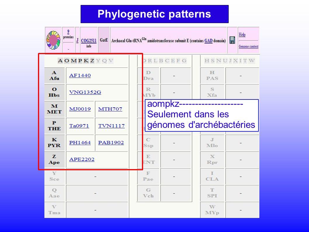 aompkz-------------------- Seulement dans les génomes d archébactéries Phylogenetic patterns