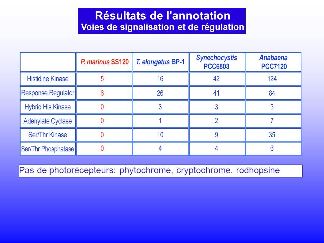 Voies de signalisation et de régulation Pas de photorécepteurs: phytochrome, cryptochrome, rodhopsine