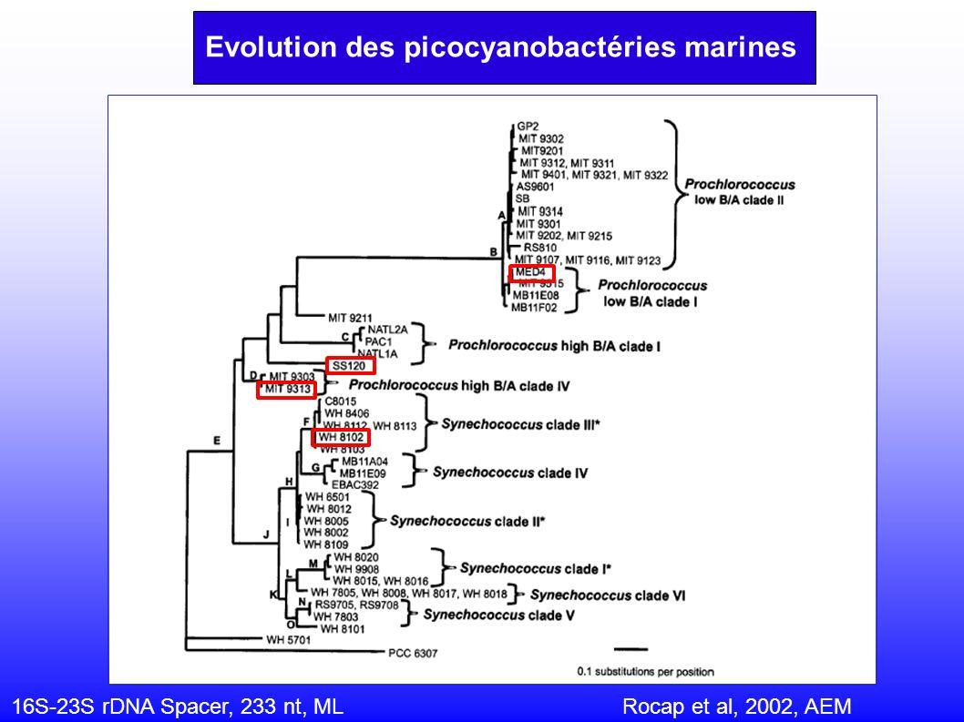 16S-23S rDNA Spacer, 233 nt, ML Rocap et al, 2002, AEM Evolution des picocyanobactéries marines