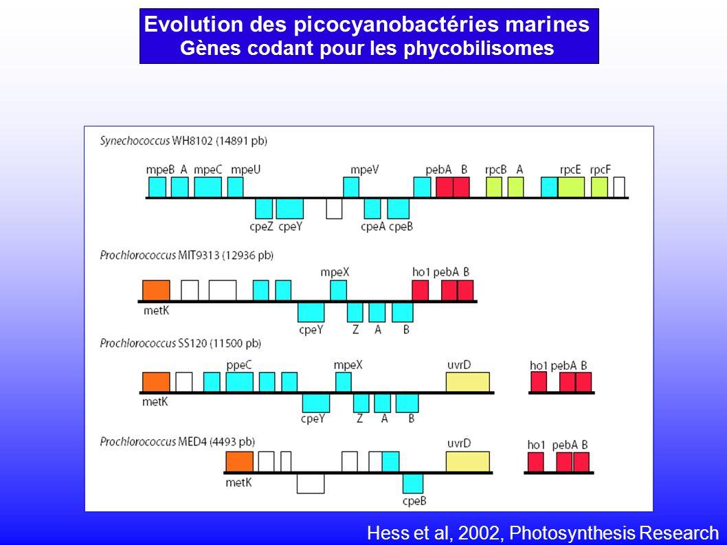 Gènes codant pour les phycobilisomes Hess et al, 2002, Photosynthesis Research