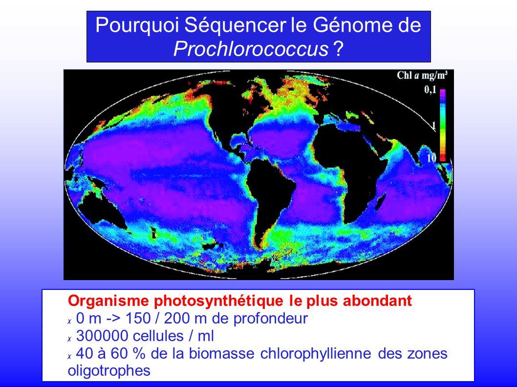 Organisme photosynthétique le plus abondant 0 m -> 150 / 200 m de profondeur 300000 cellules / ml 40 à 60 % de la biomasse chlorophyllienne des zones oligotrophes Pourquoi Séquencer le Génome de Prochlorococcus