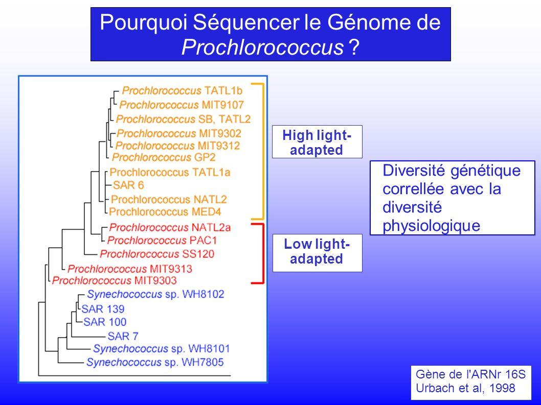 Gène de l ARNr 16S Urbach et al, 1998 High light- adapted Low light- adapted Diversité génétique correllée avec la diversité physiologique Pourquoi Séquencer le Génome de Prochlorococcus