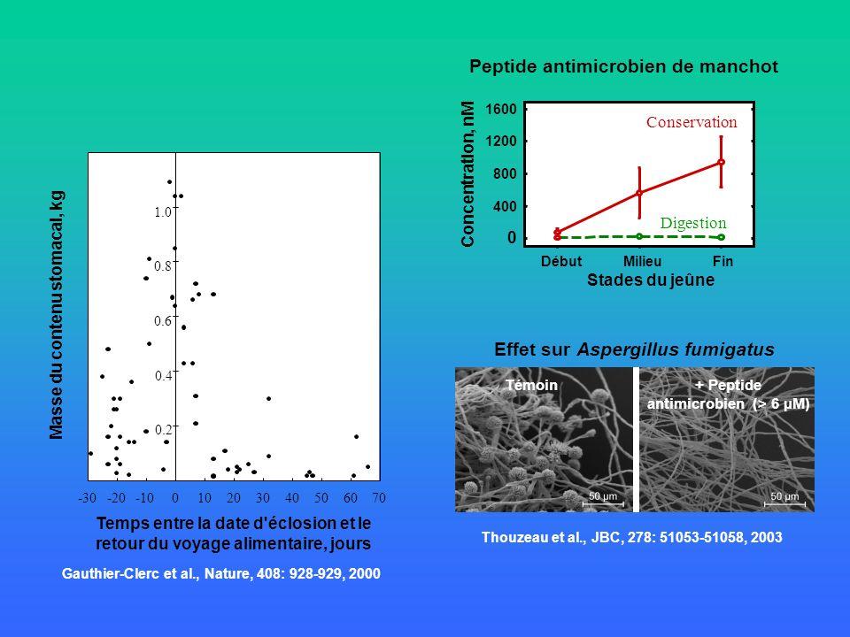 Masse du contenu stomacal, kg Temps entre la date d'éclosion et le retour du voyage alimentaire, jours -30-20-10010203040506070 0.2 0.6 0.4 1.0 0.8 +