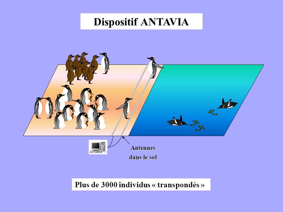 Antennes dans le sol Plus de 3000 individus « transpondés » Dispositif ANTAVIA