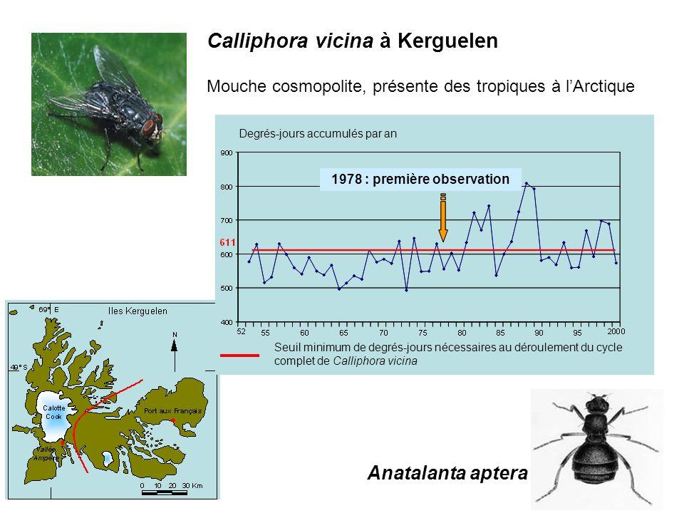 Calliphora vicina à Kerguelen Mouche cosmopolite, présente des tropiques à lArctique Anatalanta aptera Degrés-jours accumulés par an 1978 : première o