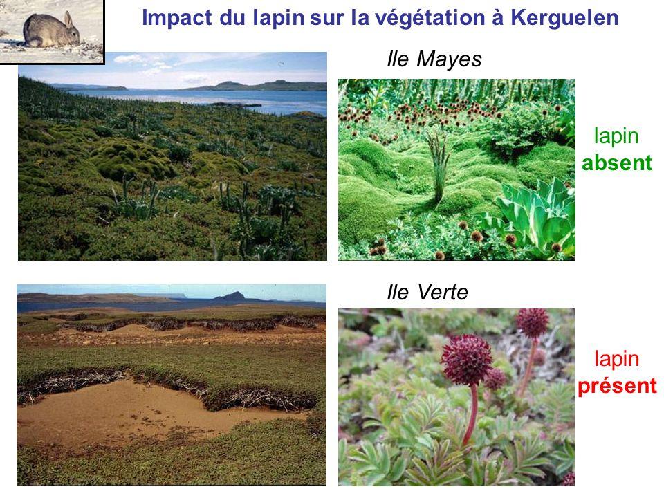 Impact du lapin sur la végétation à Kerguelen Ile Verte lapin présent Ile Mayes lapin absent