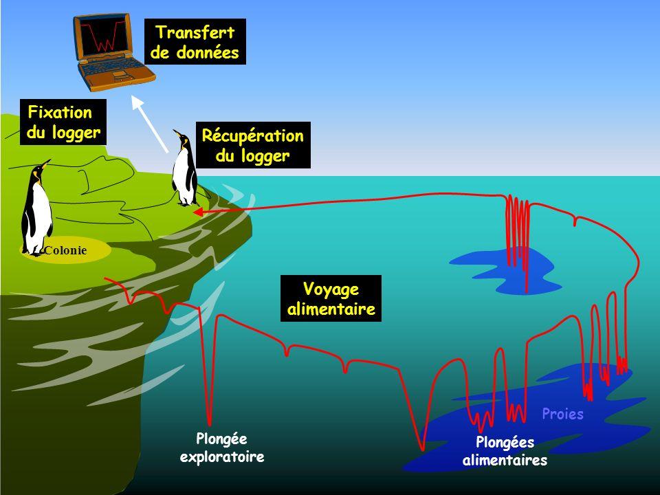 Proies Plongée exploratoire Plongées alimentaires Fixation du logger Voyage alimentaire Récupération du logger Transfert de données Colonie